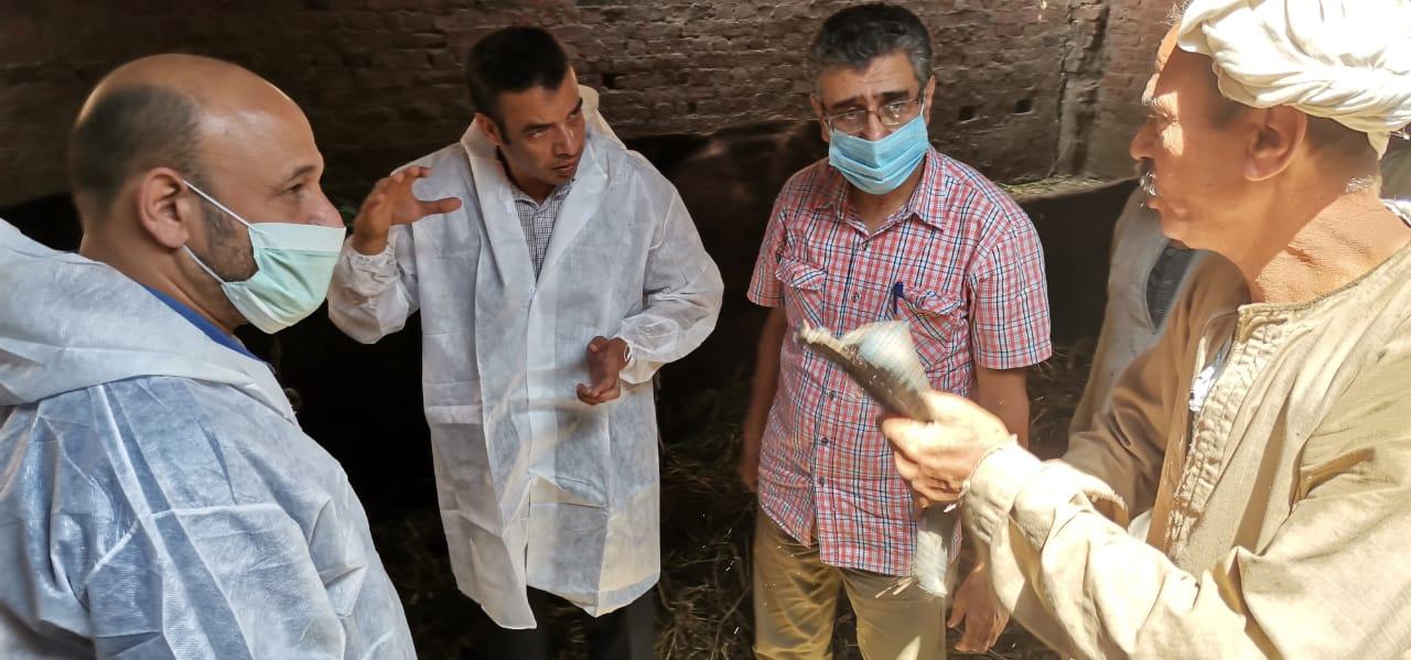 مسئولو الهيئة العامة للخدمات البيطرية يفحصون الماشية تجنبًا لإصابتها بكورونا